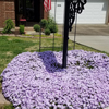 Yard of the Month - April 2019